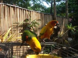 kinder-zoo-adventure-jungle-025