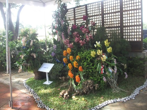 Philippine Orchid Society show 045