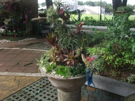 Philippine Orchid Society show 054