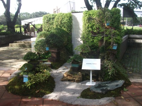 Philippine Orchid Society show 063