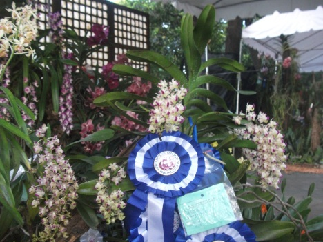 Philippine Orchid Society show 167
