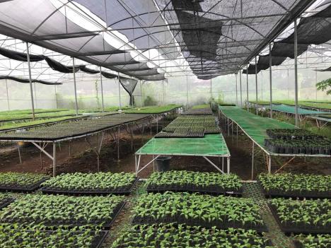 Greenhouse 1 Duran Farm.jpg