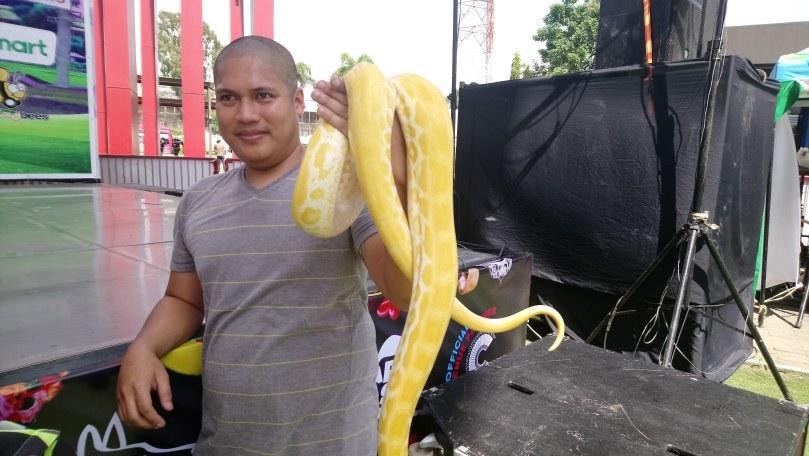 albino-snake