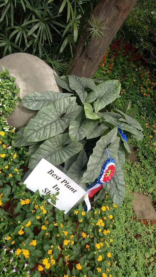 best-plant-in-show