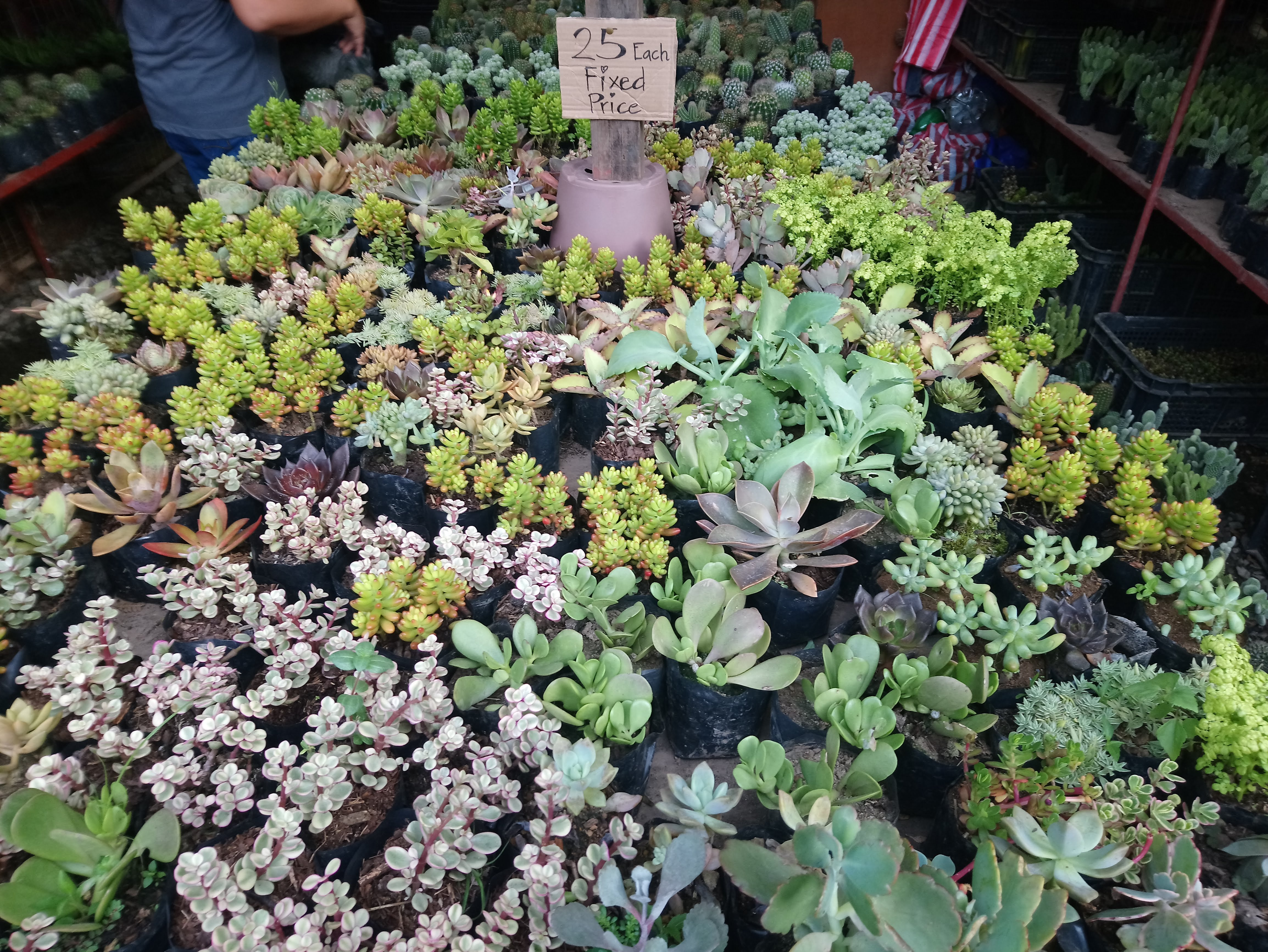 cacti-and-succulents