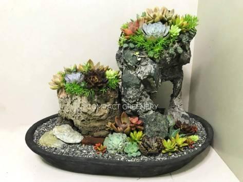 dish-garden