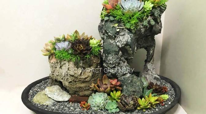 Cactus and Succulent Dish Gardening Making Workshop at Grow and Show