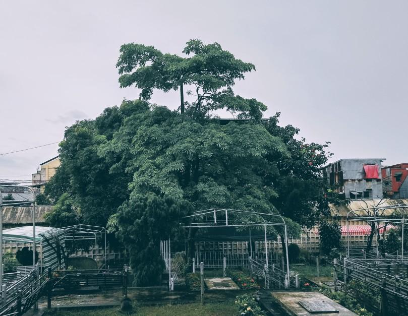 dita-tree