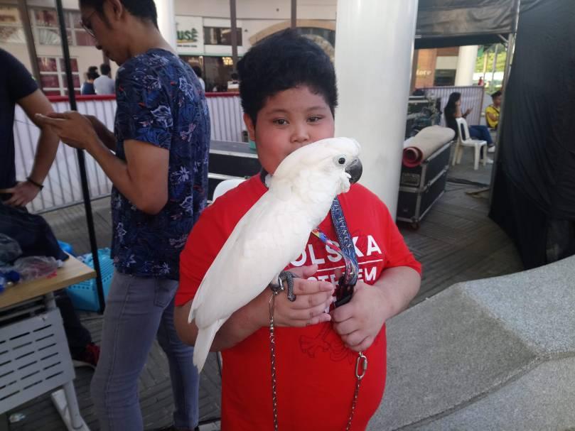 pet-cockatoo