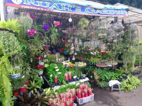 ruahs-garden