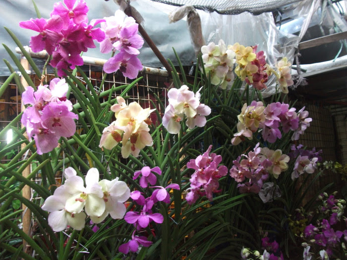 The Meaning And Symbolism Of Orchid Collectors Connection