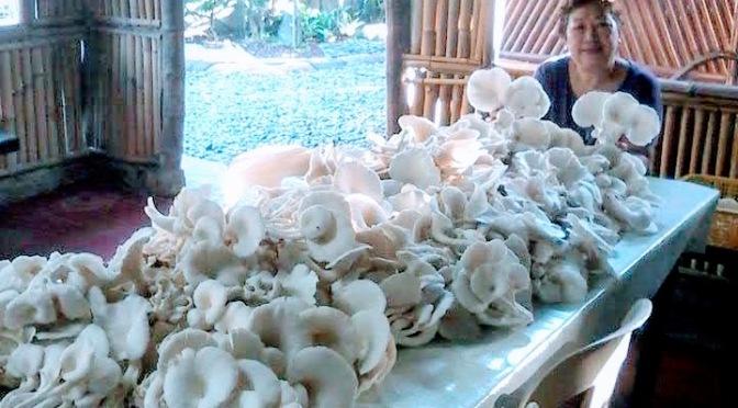 Great Mushroom Dishes at VC Teodoro Farm