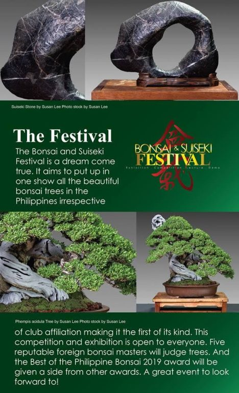 Bonsai-and-Suiseki-festival