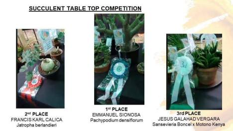 succulent-table-top