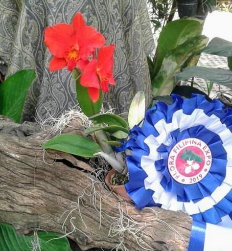 best-cattleya