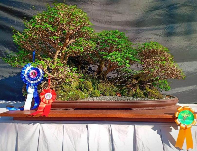 bonsai-2-susan-lee