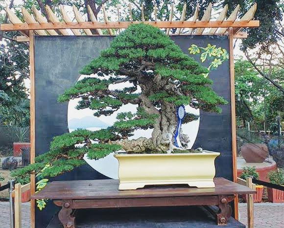 bonsai-exhibit