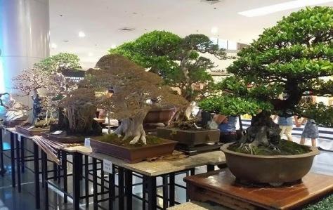 bonsai-sanib-puwersa