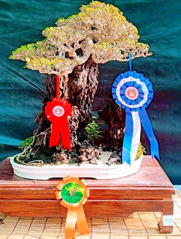 bonsai-susan-lee