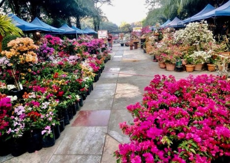 bougainvillea-commercial-stalls