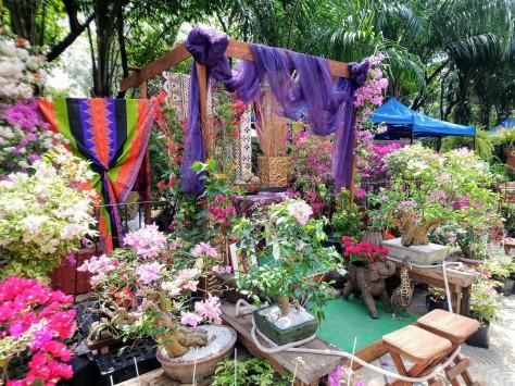 bougainvillea-exhibit