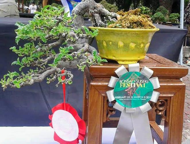 sampaloc-bonsai-